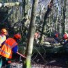 Clearing - Clearing a fallen Beech tree (1)